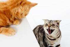 A-cat-fight.jpg