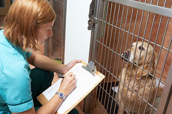 Certificate in Applied Veterinary Nursin