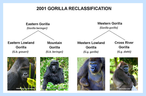 il-gorilla-reclassification-04.jpg