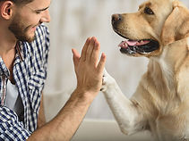 animal-assisted-therapy-for-alcoholism-1