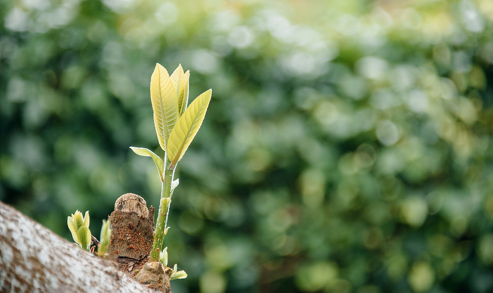 selective focus photo of tree with green leaves