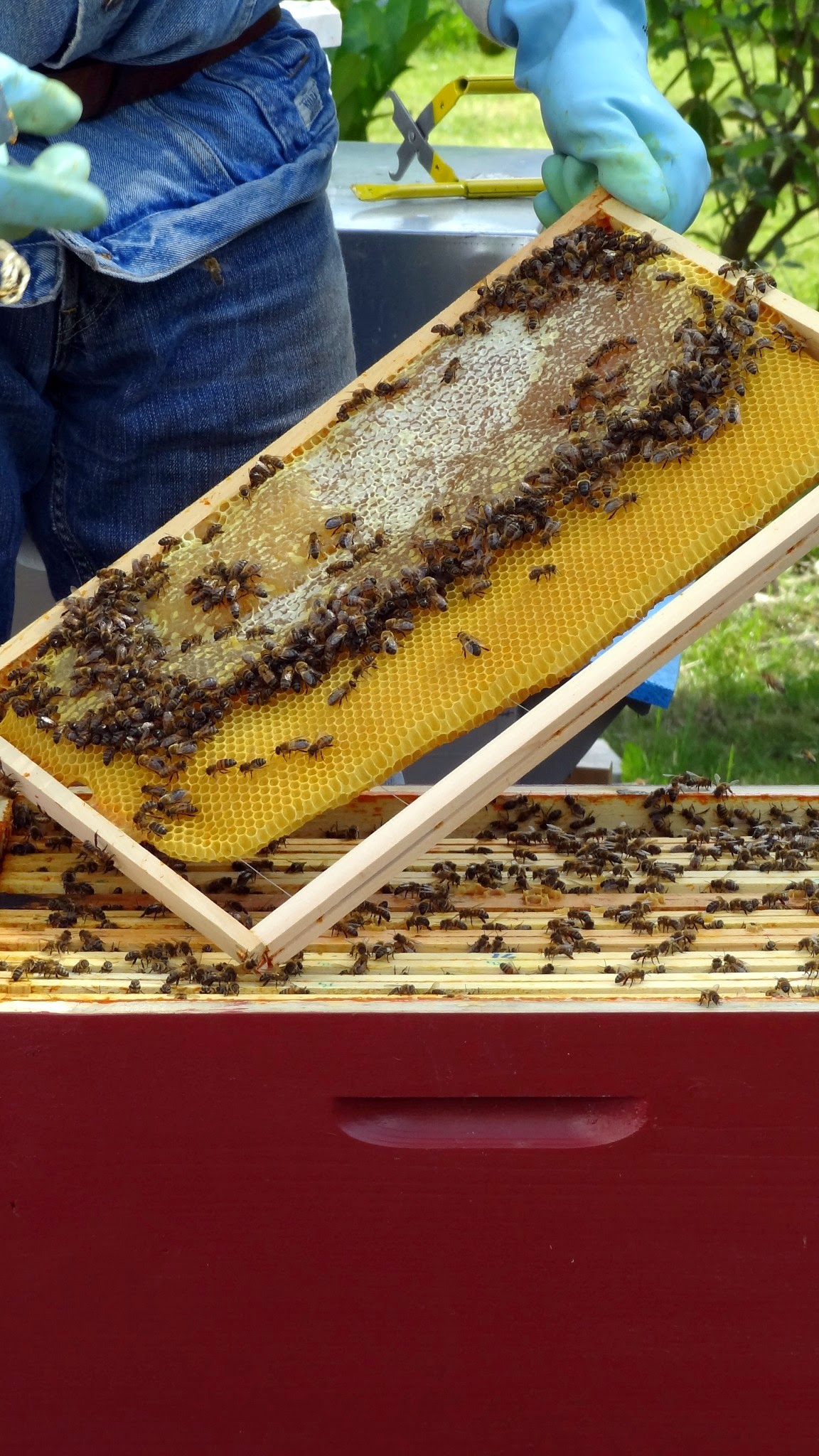 cadre de corps de ruche