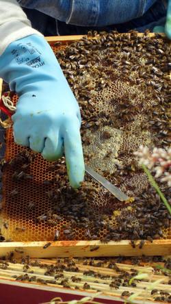 cadre de corps avec miel