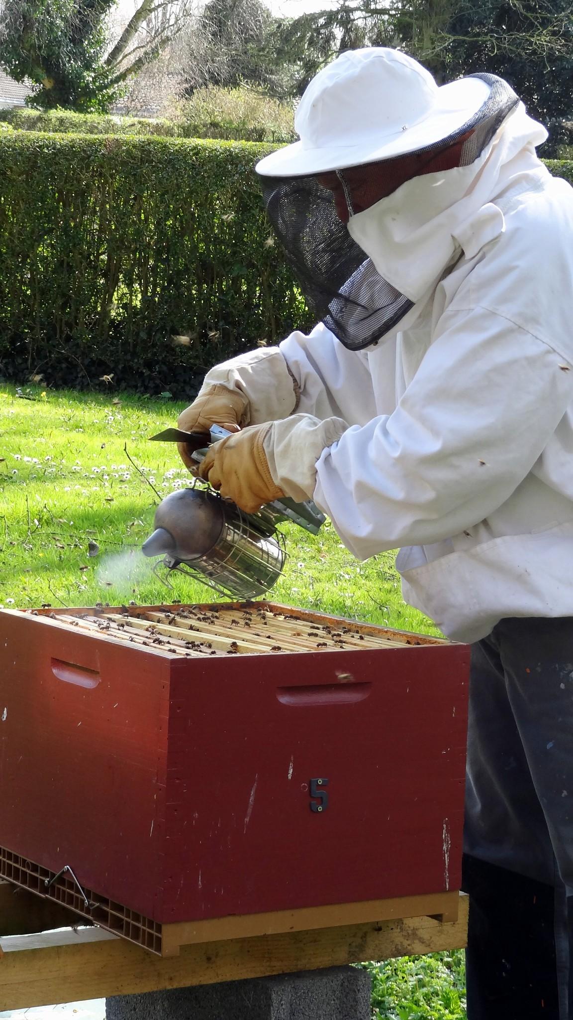 fumée pour abeilles