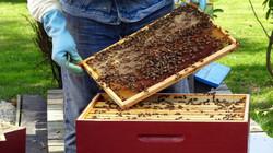 cadre d'abeille