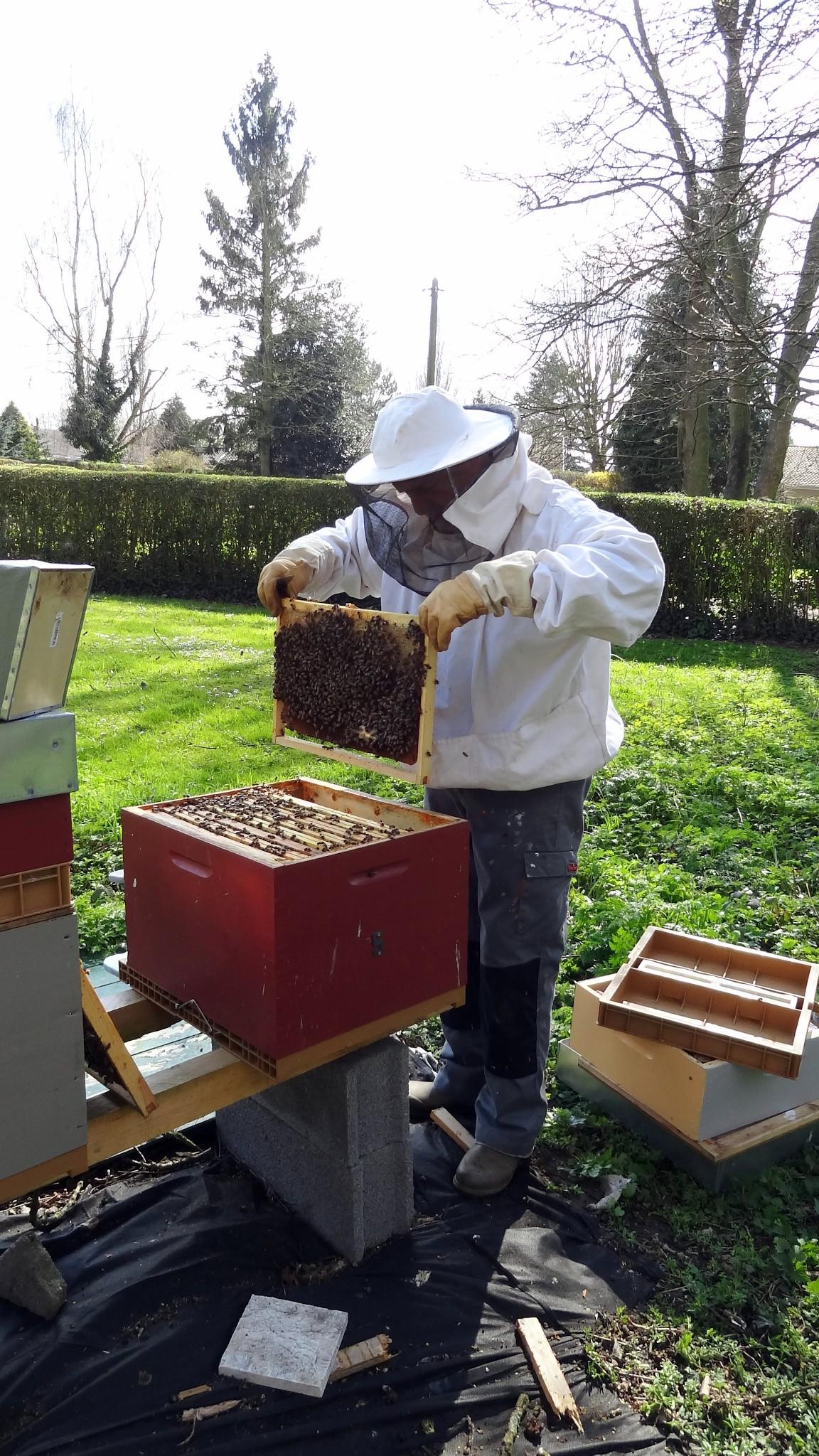 Luc visite une ruche