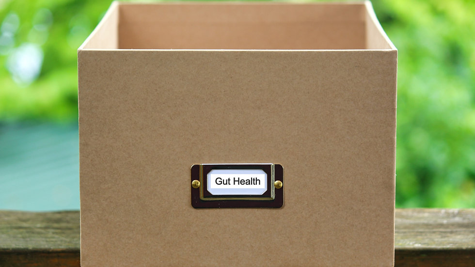 Gut Health Starter Box