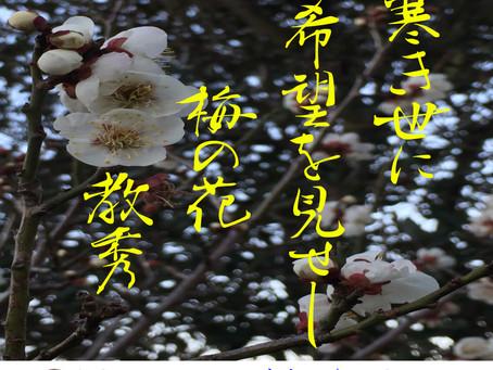 【梅の花】