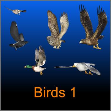 birds 1.png