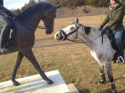 """Checking Out the """"New"""" Horse"""