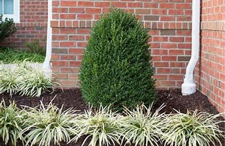 Landscape Removals and Replacements