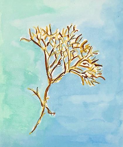 Seaweed Study 2