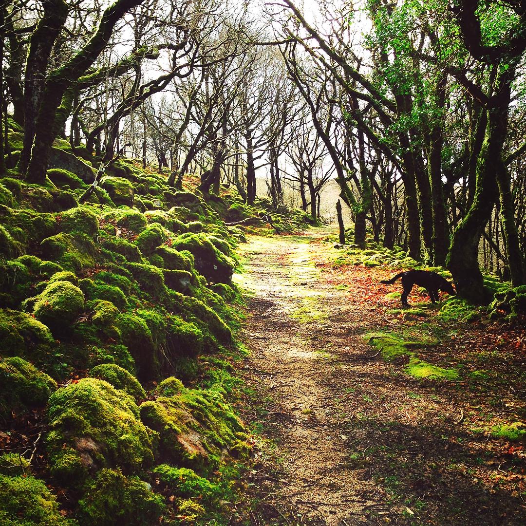 Ancient Forest Dartmoor
