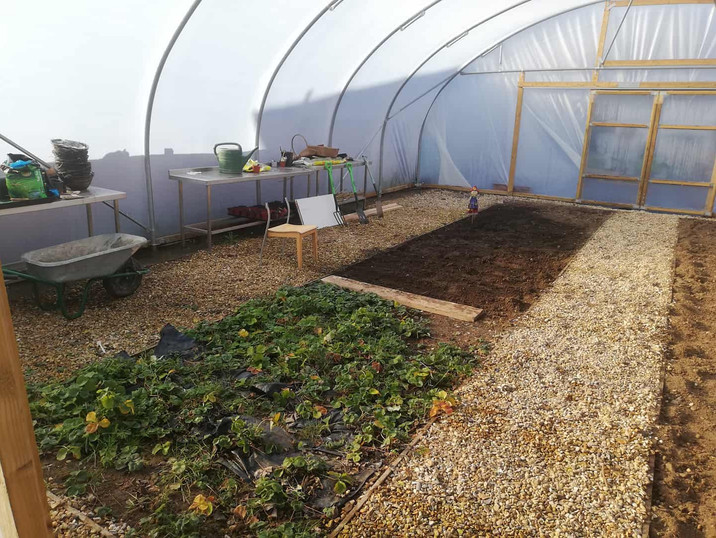 Our Polytunnel in development.