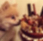 dog cake 1.jpg