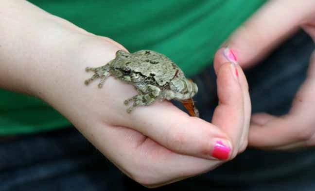 Tonya's froggie
