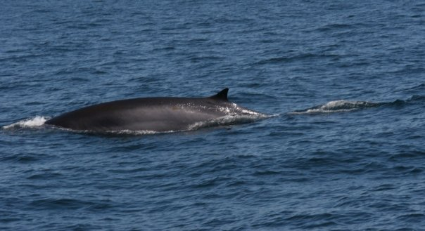 Field Studies Trip: Cape Ann Whale W