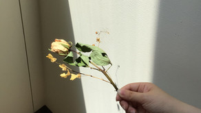 白菊会の日常①
