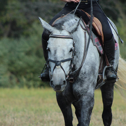 grey horse_edited.png