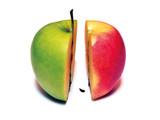 Alberoni book cover illustration