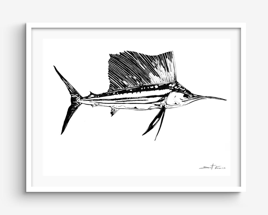 Flared Sailfish