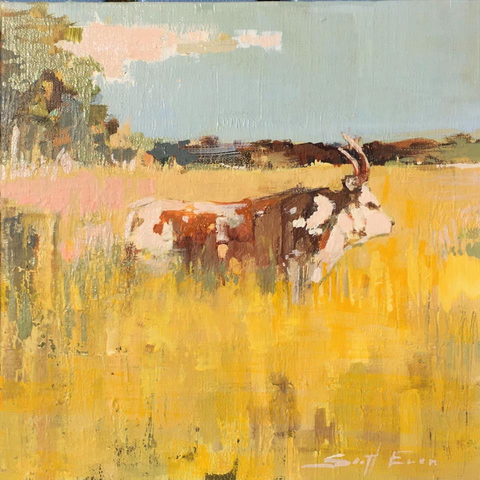 Longhorn in Field