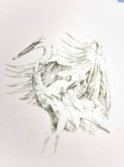 Egret #2  1