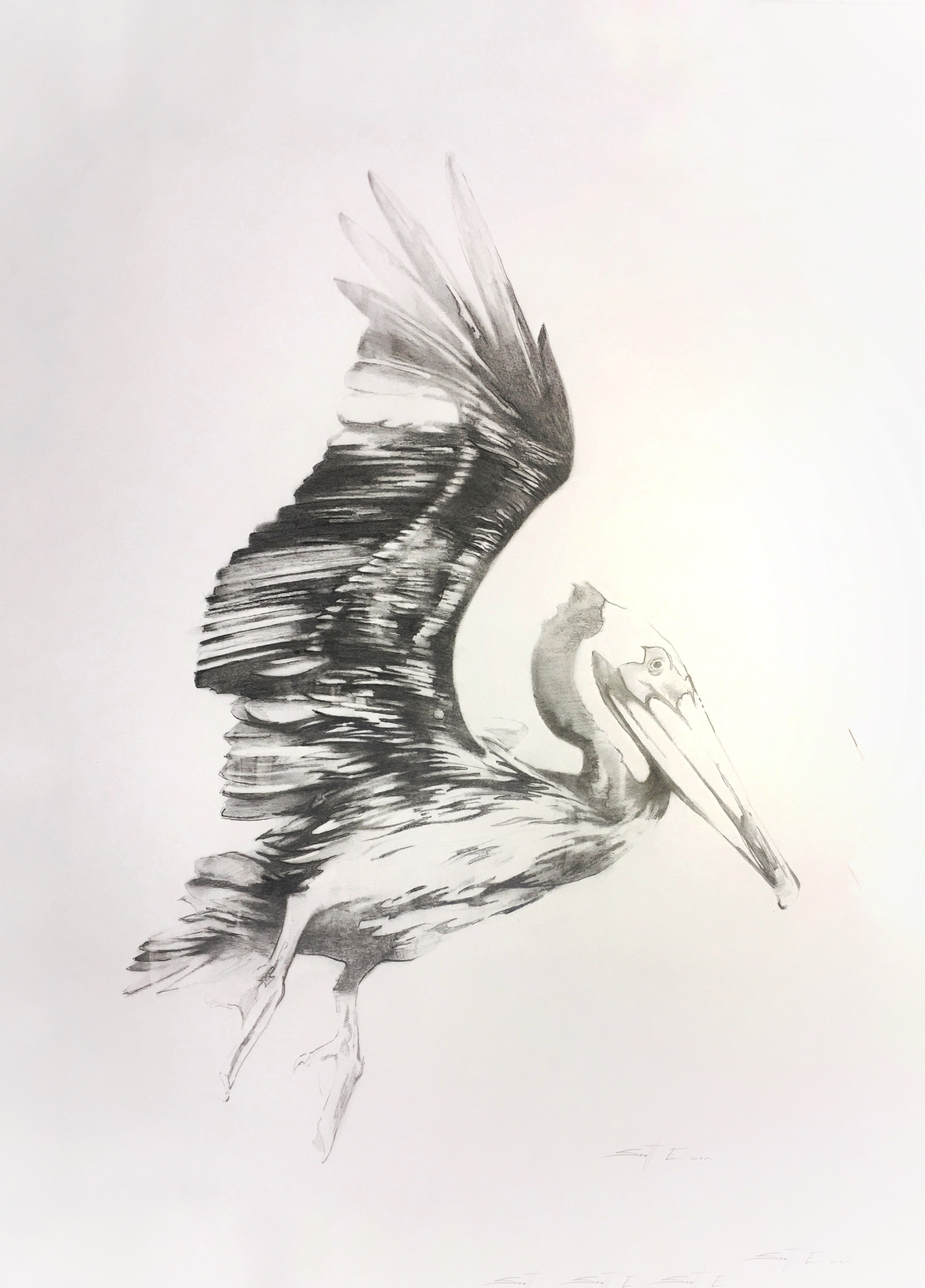Pelican #4