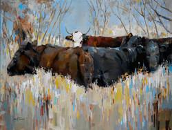 Fall Cows