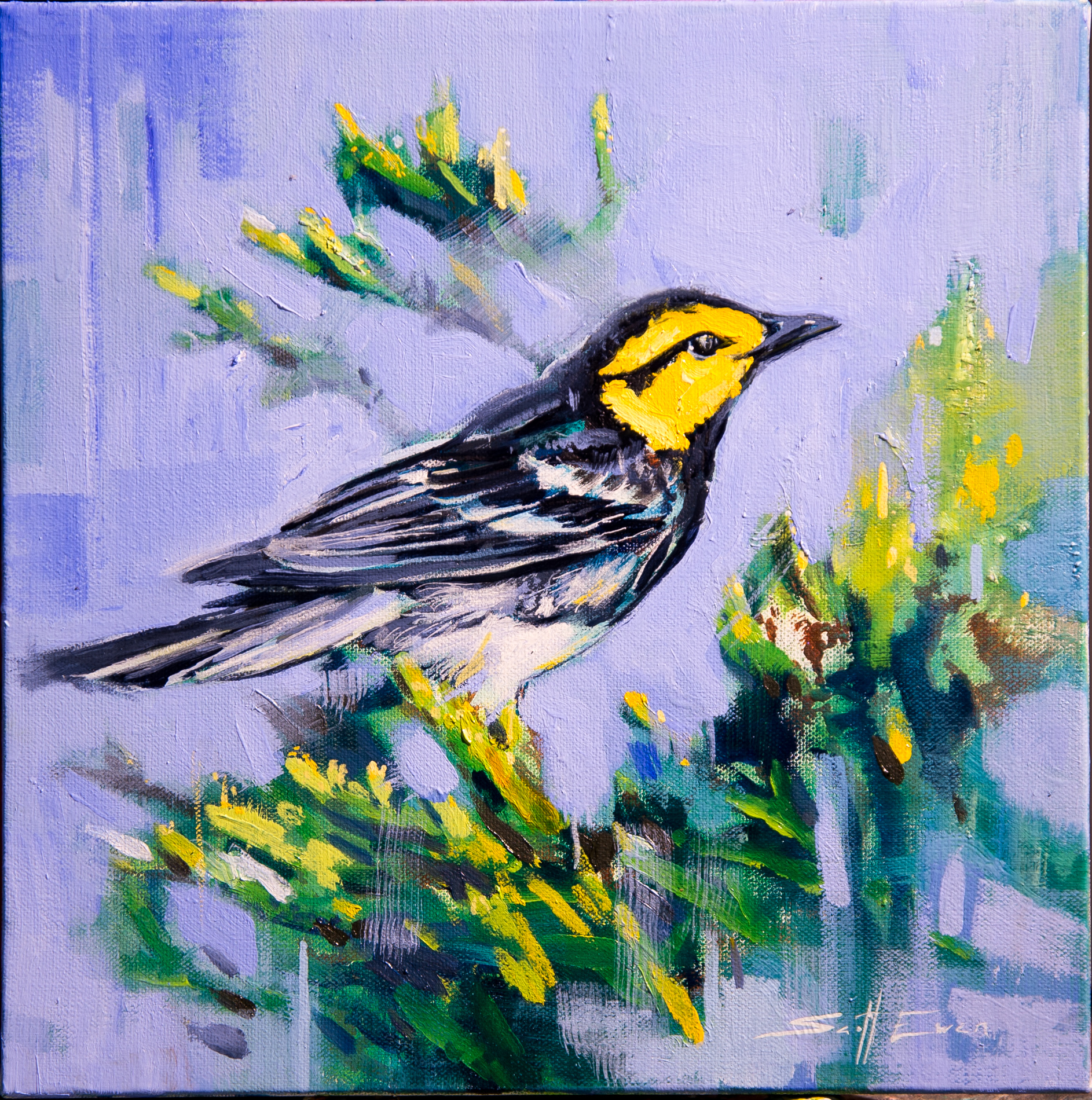 Yellowfaced Warbler