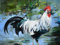 White Rooster