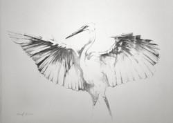 Egret #3