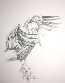 Pelican #6