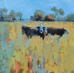 Old Lockhart Cows