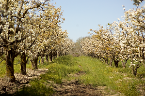 Farm in Bloom copy.tiff