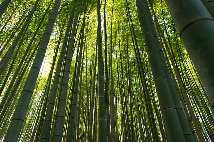 bamboo-forest-in-arashiyama-kyoto-japan-