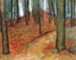 wood-with-beech-trees.jpg