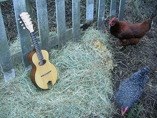 vaughan chicks.JPG