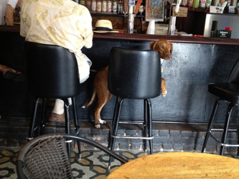 Ginger at Harry's Corner