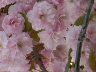 Foråret er stærkt på vej