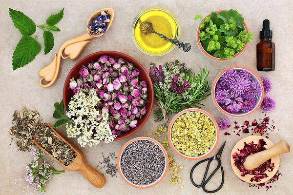 Herbal medicine preparation with fresh h
