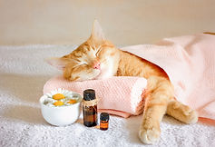 Sleeping cat on a massage towel. Also in