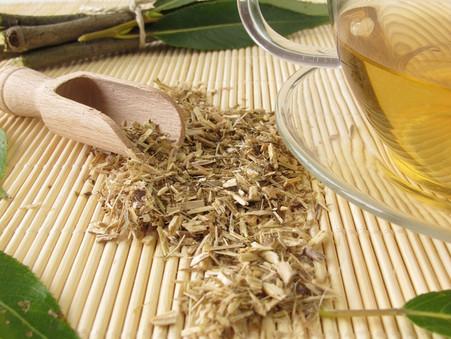 Hoe maak je oxymel, thee en een tinctuur van wilgenbast?