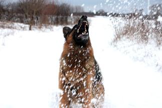 Schnee Max 1.jpg