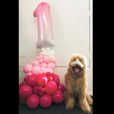 Organic Number 1 Balloon Display