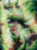 04Slaw_Alligators_.jpg