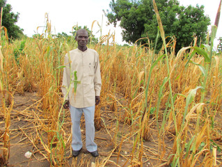 DROUGHT SITUATION IN MALAWI