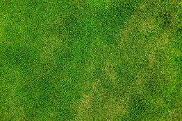 grass-84622_1920.jpg