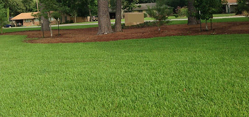 Sod, Turf, and Artificial Turf