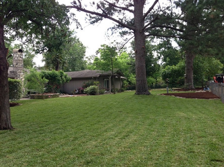 Yard and Lawn Maintenance